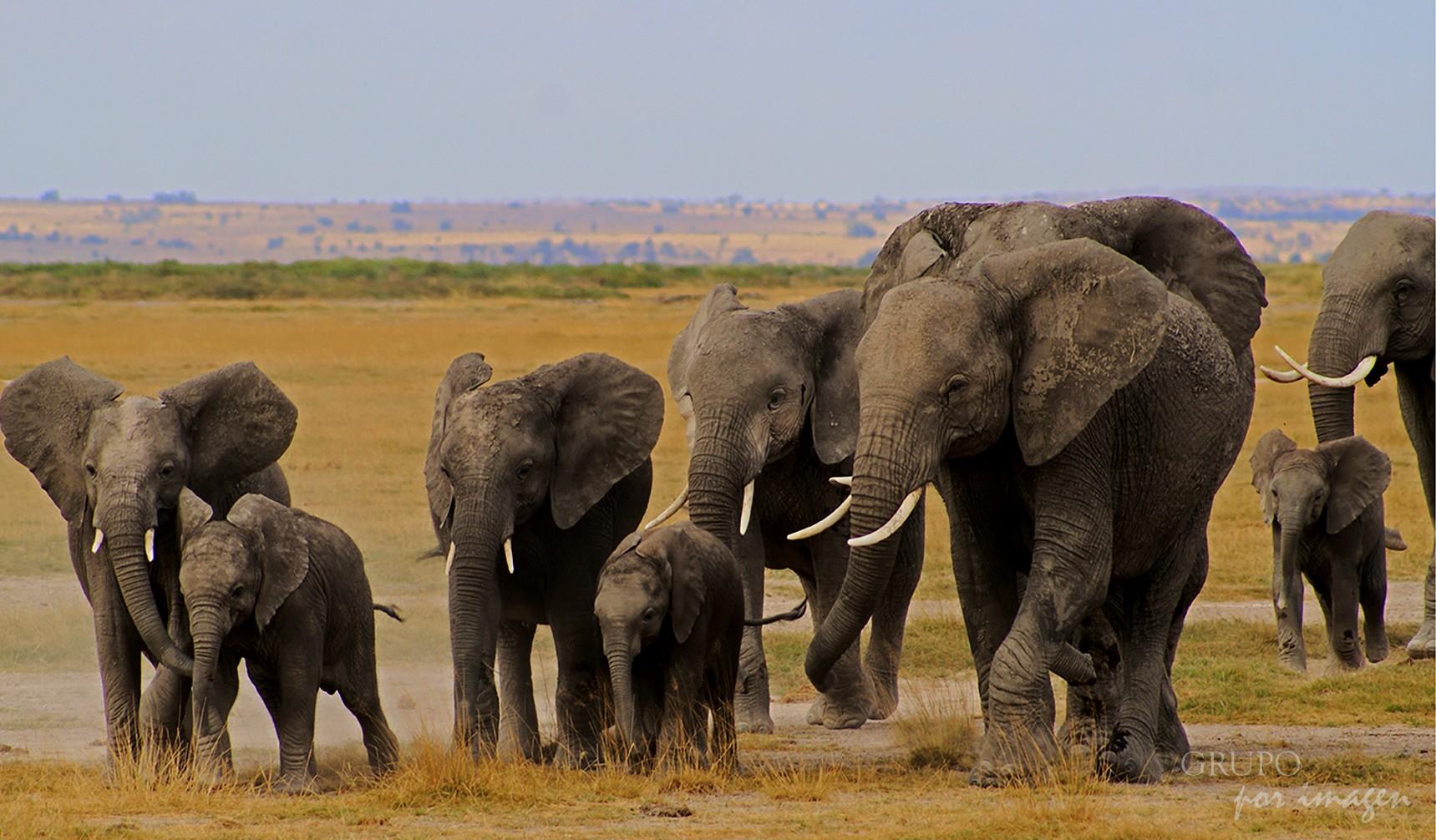 Parque Nacional Amboselli 2 – Kenya / Graciela Lavado