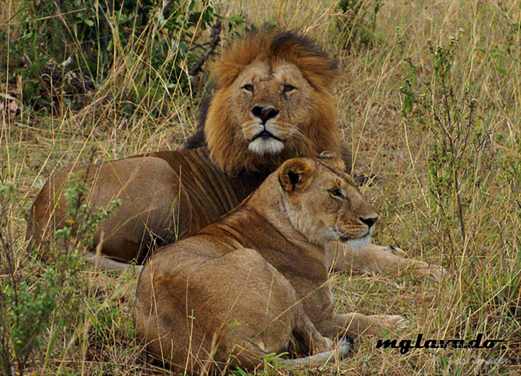 Reserva Nacional Massai Mara – Kenya / Graciela Lavado