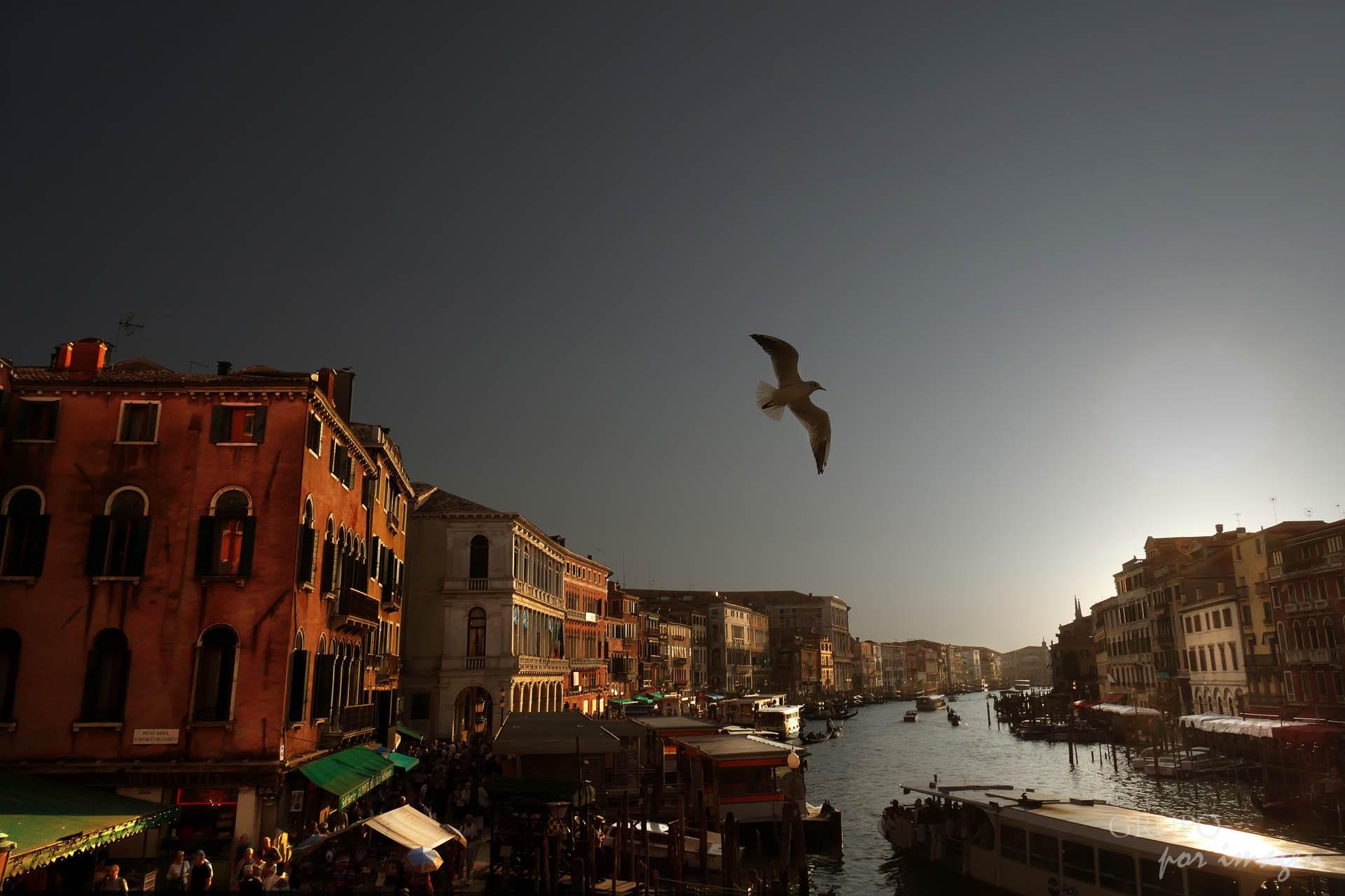 Venecia / Efraín David